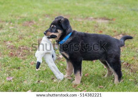 Puppy that plays with toy.