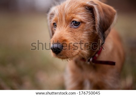 Puppy - the close up portrait  - stock photo
