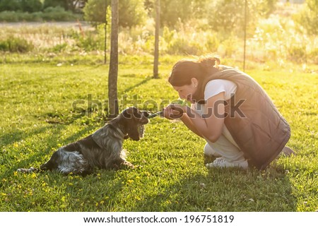 Puppy training - A young women training a blue roan English Cocker Spaniel at the park - stock photo