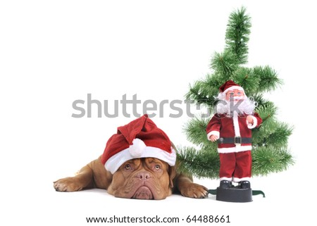 Puppy under a Christmas Tree with Santa figure - stock photo
