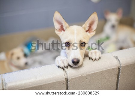 Puppy up for adoption - stock photo