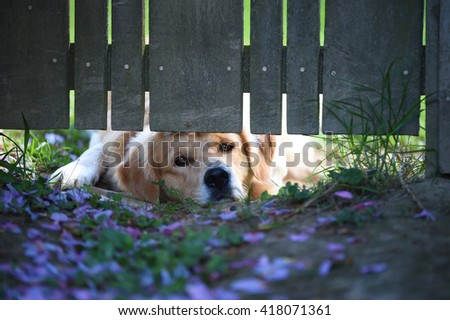 puppy waiting under gate
