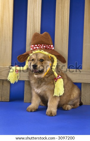 Puppy wearing hat and braids sitting in front of picket fence. - stock photo