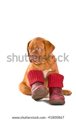 Puppy Wearing Red Shoes Ready For Cold Weather Walk, Isolated - stock photo