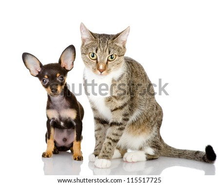 puppy with a cat attentively look in the camera. isolated on white background - stock photo