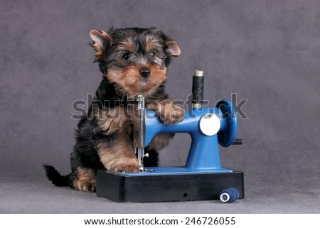 Puppy with a sewing machine - stock photo