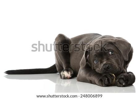 Puppy with bone - stock photo