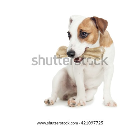 Puppy with bone. dog chewing on a bone - stock photo