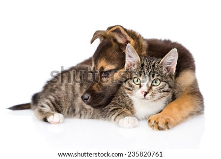 puppy with cat lying together. isolated on white background