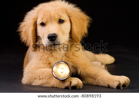 puppy with flashlight