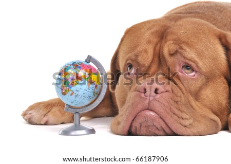 Puppy with globe is thinking of Far-off Destinations - stock photo