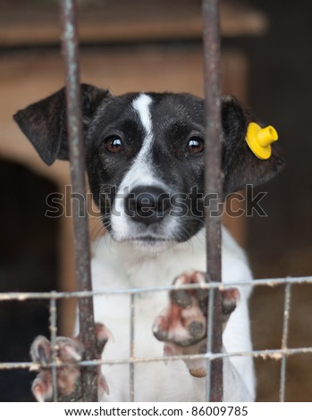 Puppy with label on the ear locked in the cage - stock photo