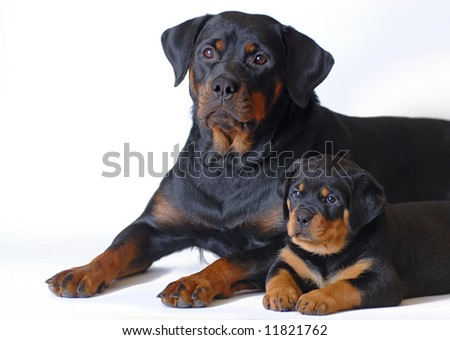 Puppy with mom - stock photo
