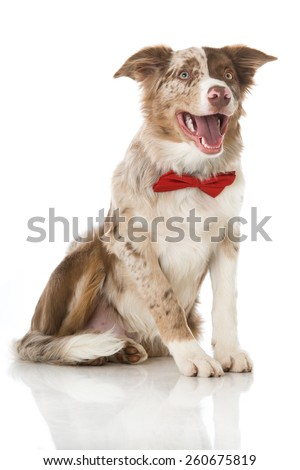 Puppy with red tie - stock photo