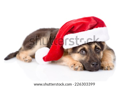 puppy with santa hat. isolated on white background