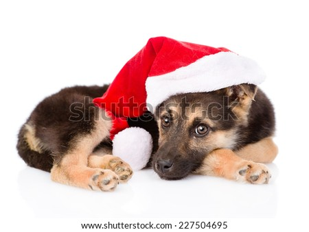 puppy with santa hat. isolated on white background - stock photo