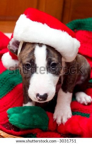 Puppy with Santa hat on Christmas blanket - stock photo