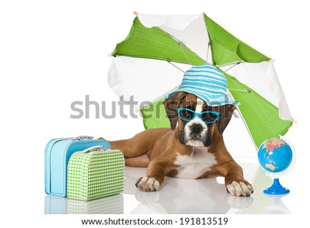 Puppy with suitcase and  beach umbrella
