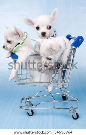 pups in shopping car - stock photo
