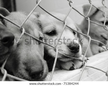 Pups looking out from behind the wire mesh of their pen - stock photo