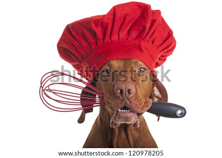 pure breed vizsla dog chef wearing red cap and holding egg beater in mouth - stock photo