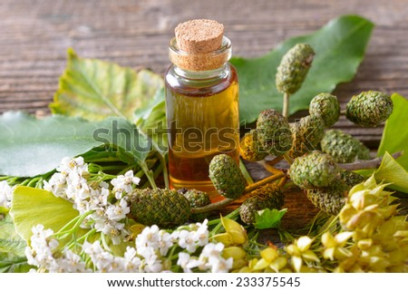 Pure herbal essential oil in glass bottle on woden desk with ginkgo leaf and alder cones - stock photo