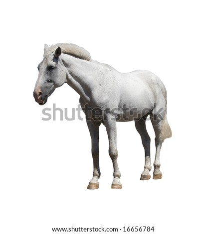 Pure horse on white background
