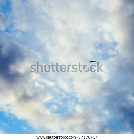 pure sky of russian north - stock photo