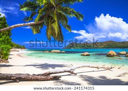 pure tropics. white sand, palm-tree, azure sea - stock photo