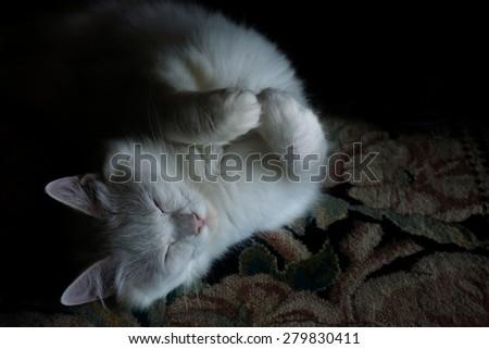 Pure white cat sleeping on carpet - stock photo