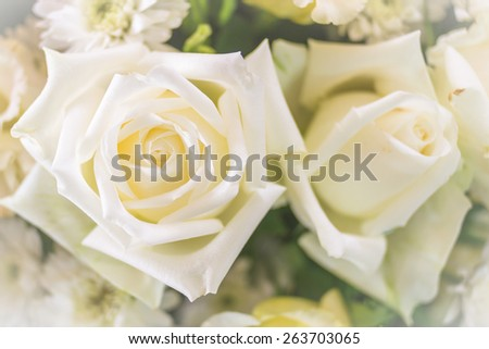 Pure white rose (focus on rose's flower hub on left-hand) : Background for mothers day card : Happy mother's day