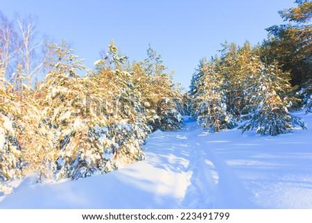 Pure Winter Happiness  - stock photo