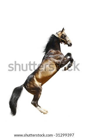 purebred ackal-teke stallion isolated on white - stock photo