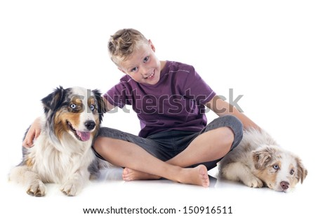 purebred australian shepherds and boy  in front of white background