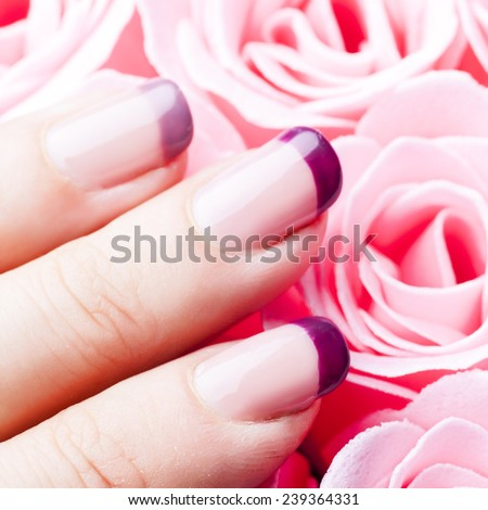Purple acrylic manicure close up on pink roses background - stock photo