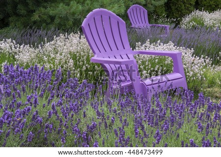 Purple Adirondack Chairs in a Lavender Field