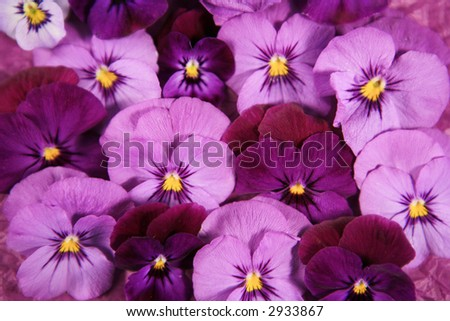 Purple pink pansy flower background stock photo royalty free purple and pink pansy flower background mightylinksfo Choice Image