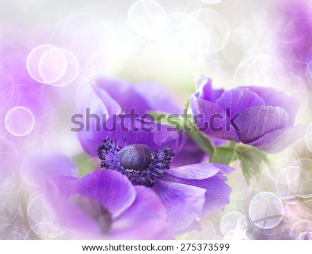 Purple anemone with bokeh on pastel background - stock photo