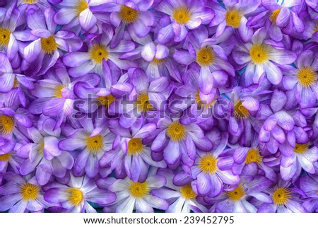Purple artificial flowers - stock photo