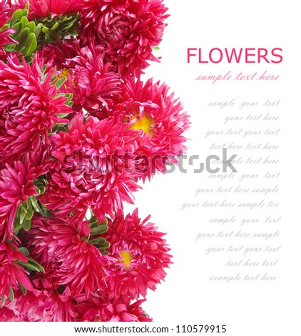 Purple asters background isolated on white with sample text - stock photo
