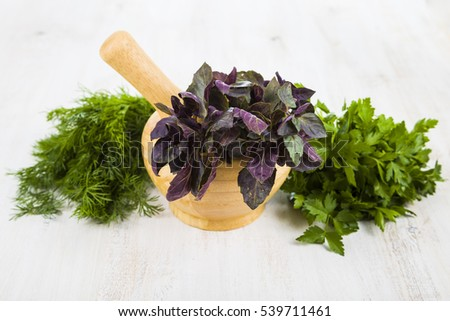Purple basil, dill and parsley on a light wooden table. Herbs closeup.