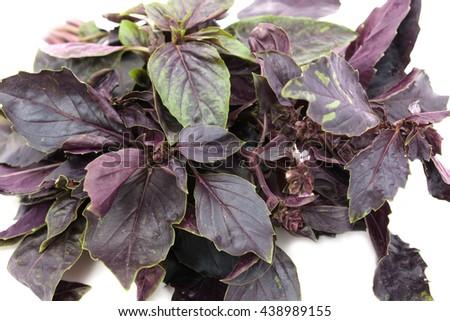 purple basil on a white background - stock photo