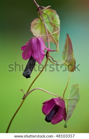 Purple bells on delicate green background (soft focus) - stock photo