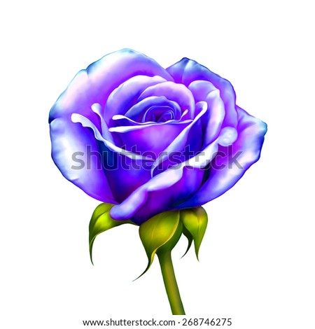 Purple Blue Rose Flower, Sexy and beautiful and rose bud isolated on white background. Vector illustration - stock photo