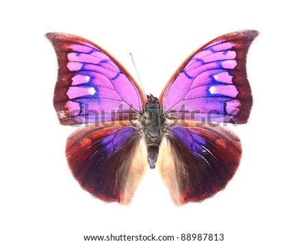 Purple butterflies isolated on white background - stock photo