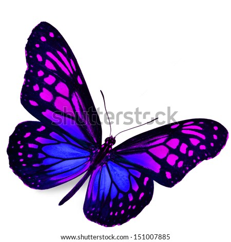 Real Purple Butterfly Pictures | www.pixshark.com - Images ...