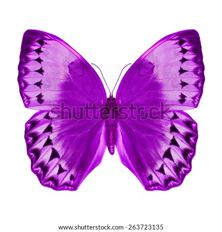 Purple butterfly upper wing profile isolated on white background. - stock photo
