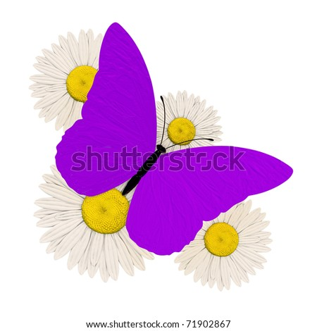 purple butterfly with four chamomile - stock photo