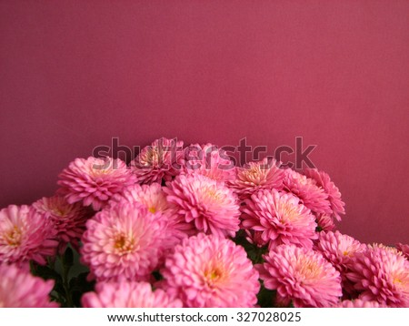 Purple chrysanthemums. Beautiful background of fresh autumnal flowers on a purple background - stock photo