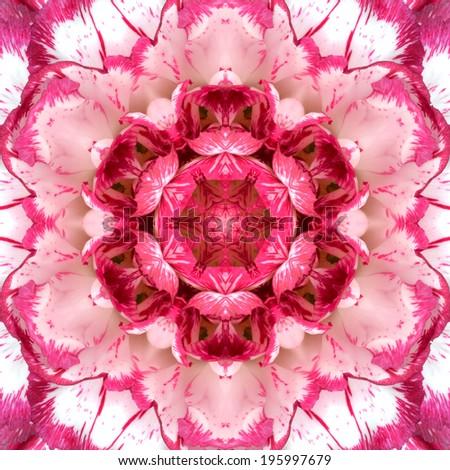 Purple Concentric Carnation Flower Center Close-up. Mandala Kaleidoscopic design - stock photo